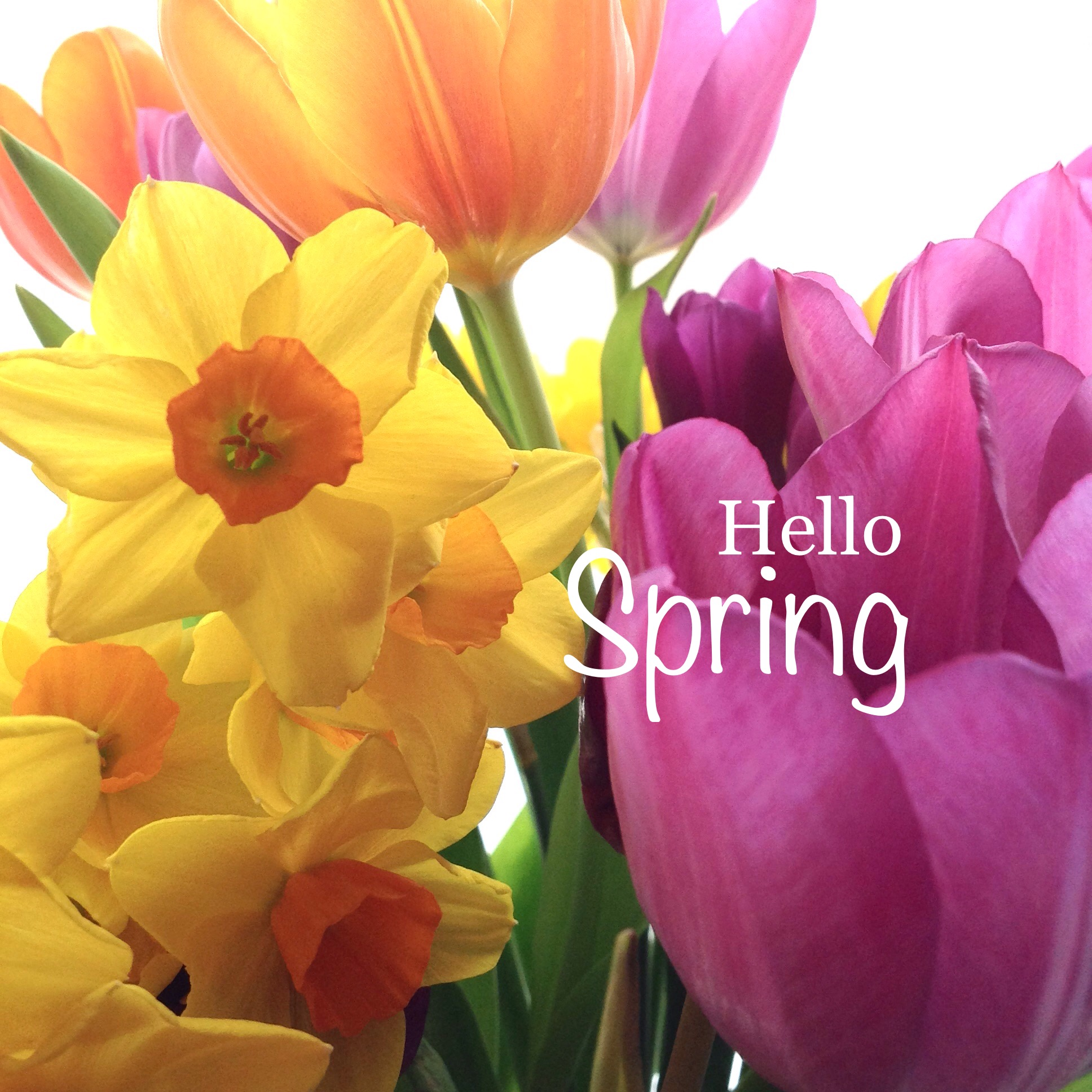 HELLO SPRING | NEW COLLECTION